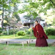 Wandering Buddha
